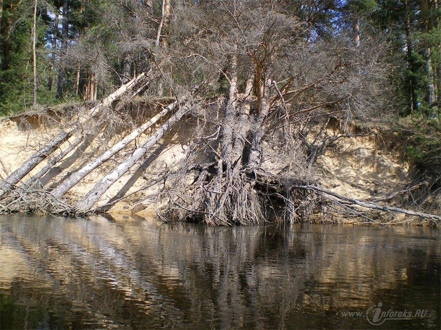 Красоты Мещерского края. Река Гусь 23