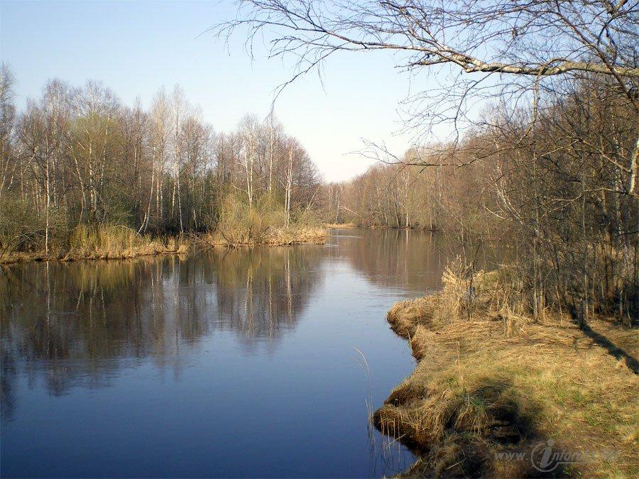 Красоты Мещерского края. Река Гусь 29