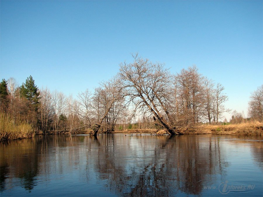 Красоты Мещерского края. Река Гусь 39