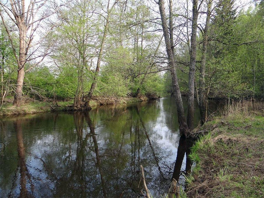 Река Колпь Мещерского края 3