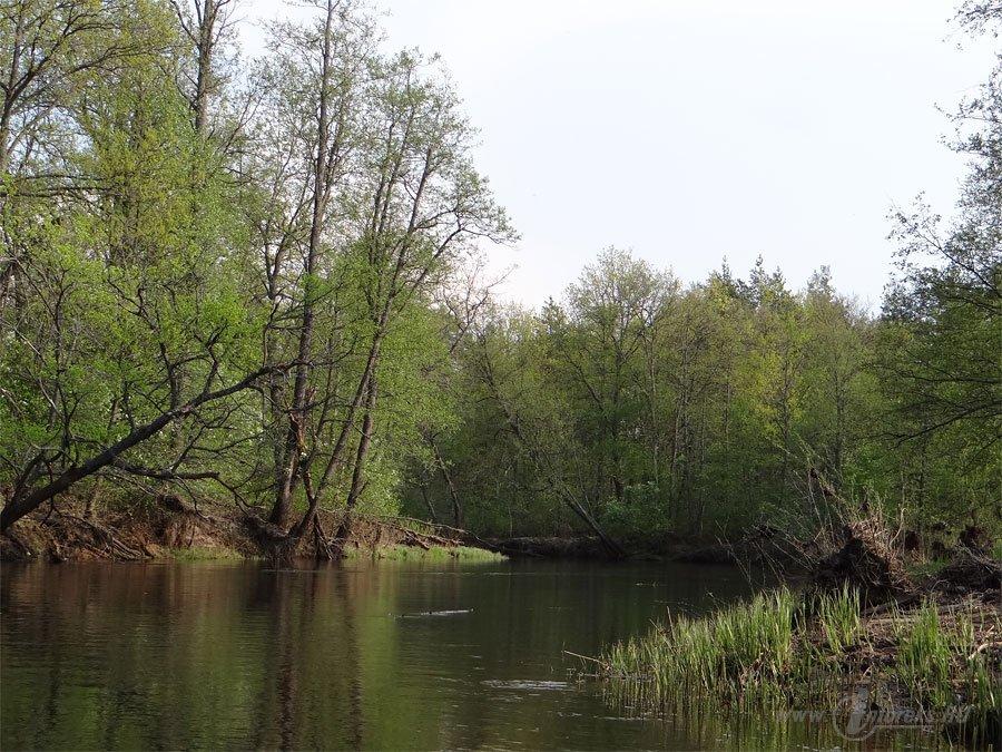 Река Колпь Мещерского края 5