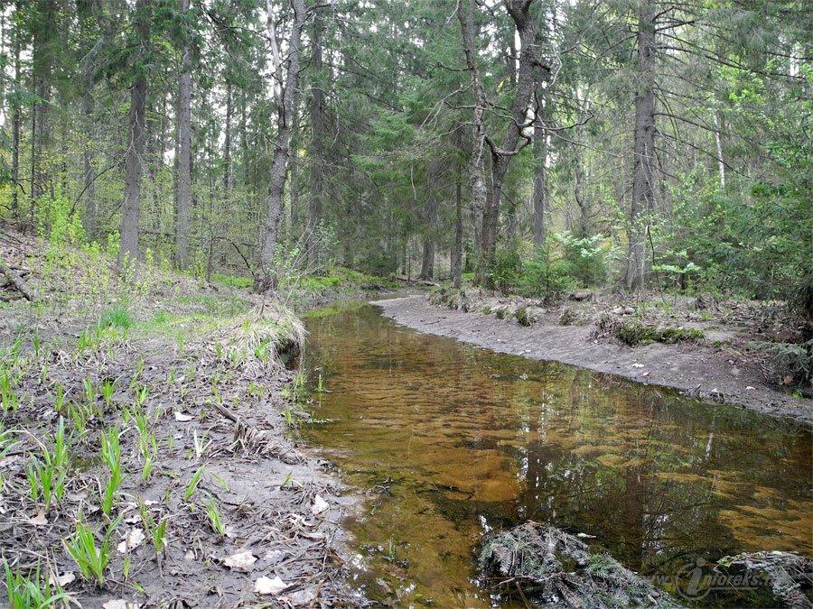 Река Колпь Мещерского края 27