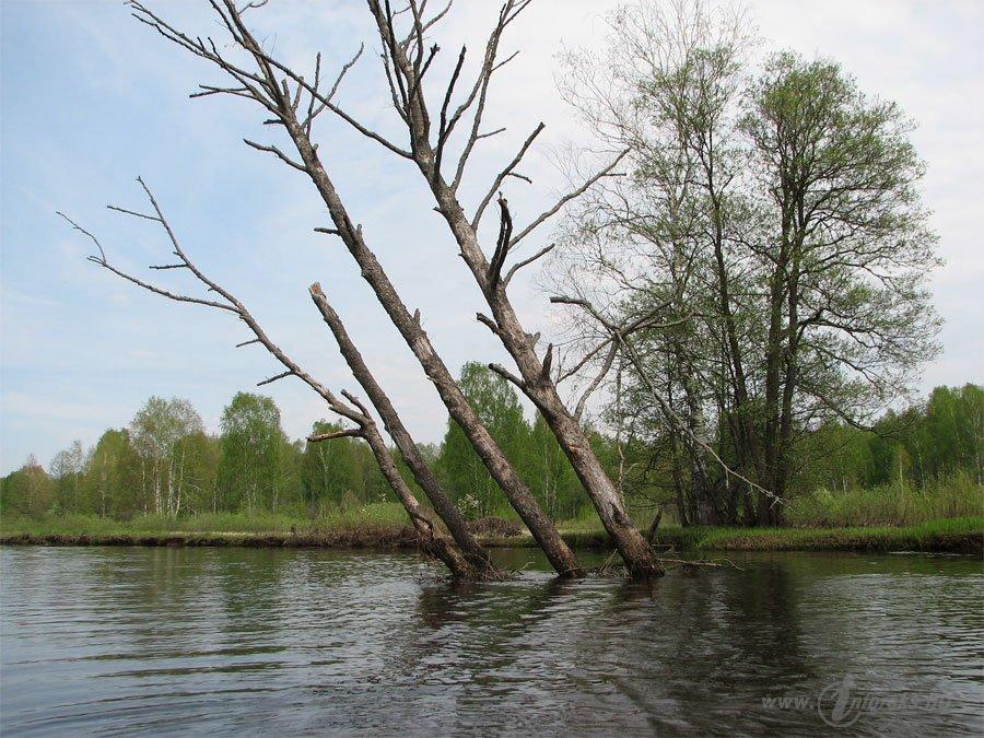 Река Колпь Мещерского края 33