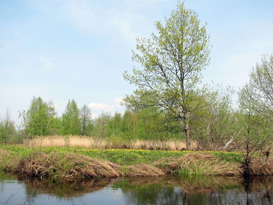 Река Колпь Мещерского края 35