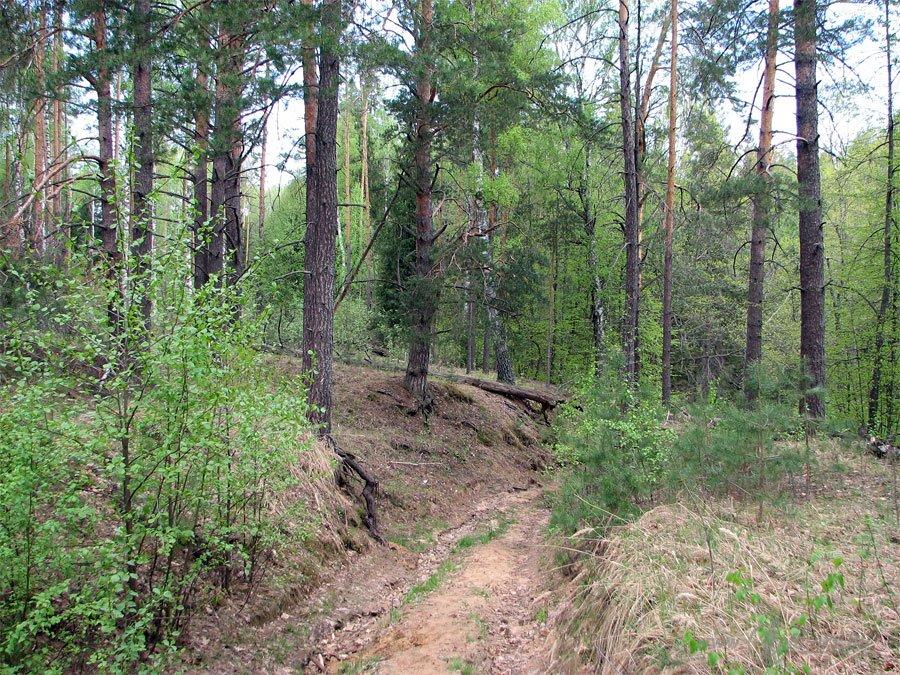 Река Колпь Мещерского края 37