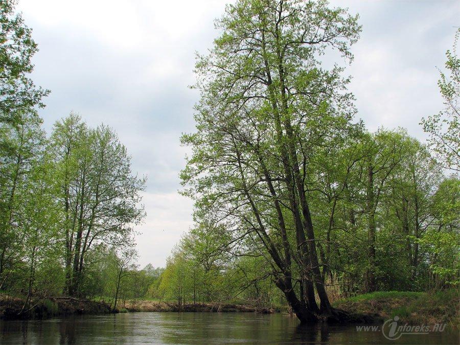 Река Колпь Мещерского края 39