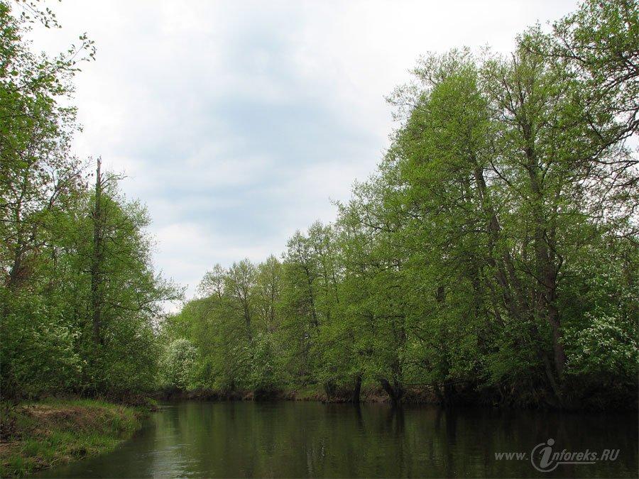 Река Колпь Мещерского края 43