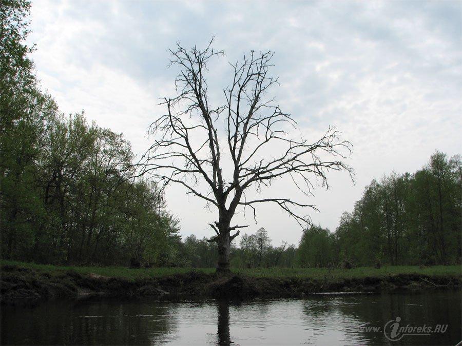 Река Колпь Мещерского края 41
