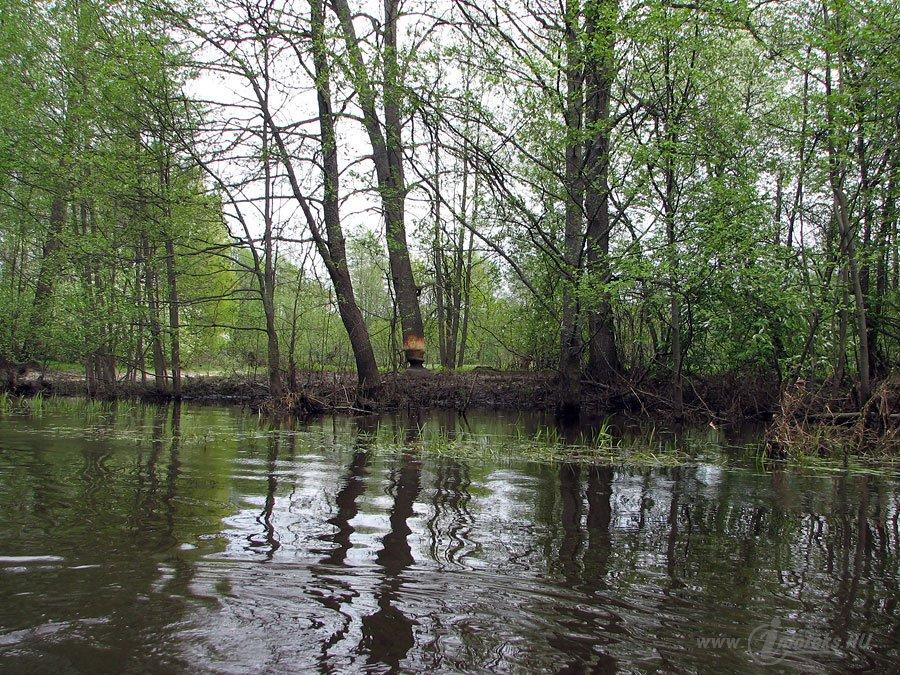 Река Колпь Мещерского края 45