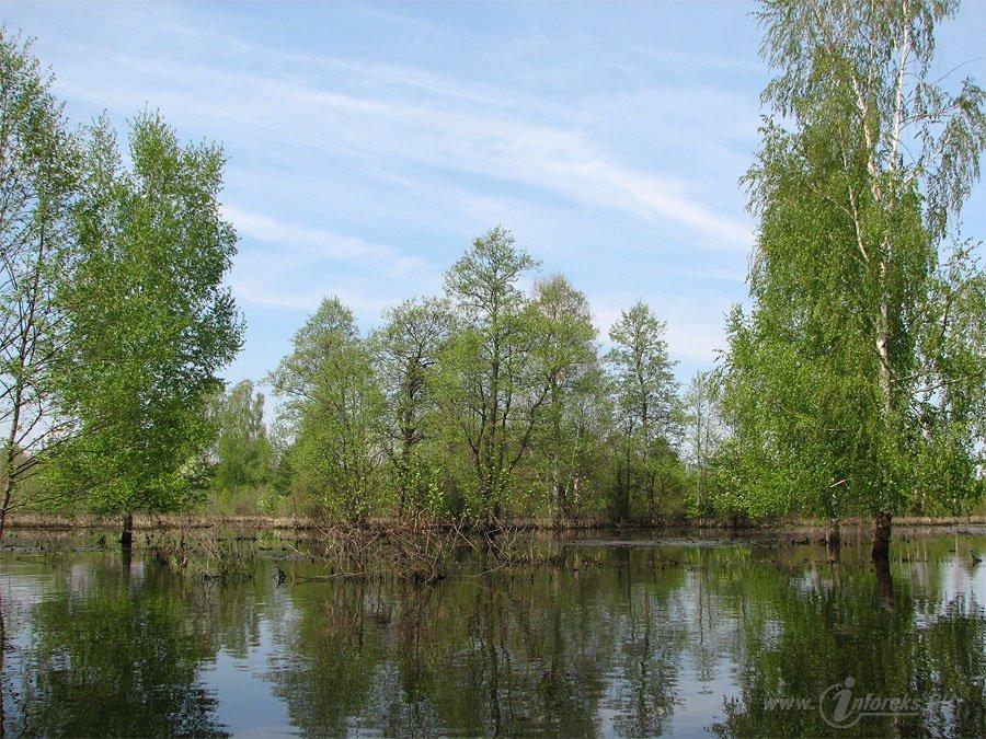 Река Колпь Мещерского края 47