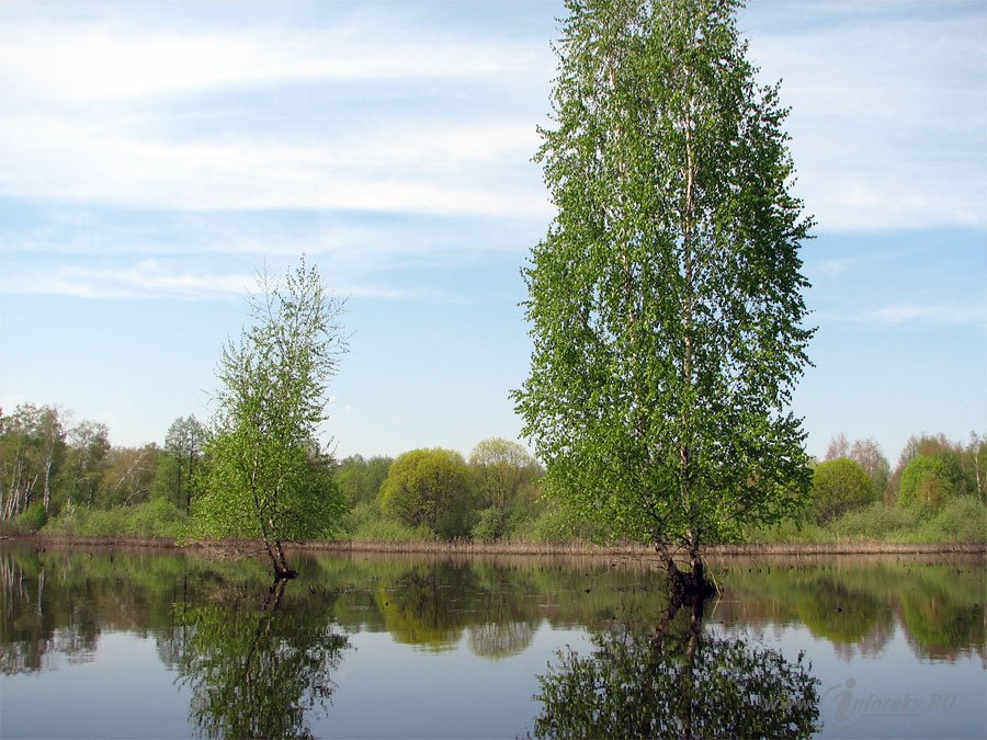 Река Колпь Мещерского края 51