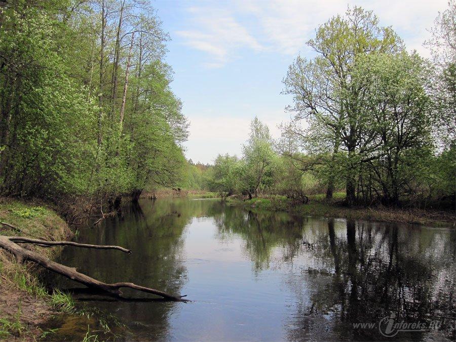 Река Колпь Мещерского края 57