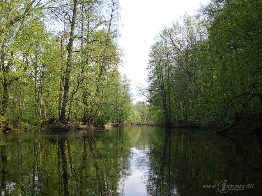 Река Колпь Мещерского края 59