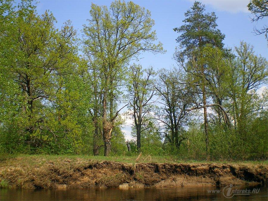 Река Колпь Мещерского края 61