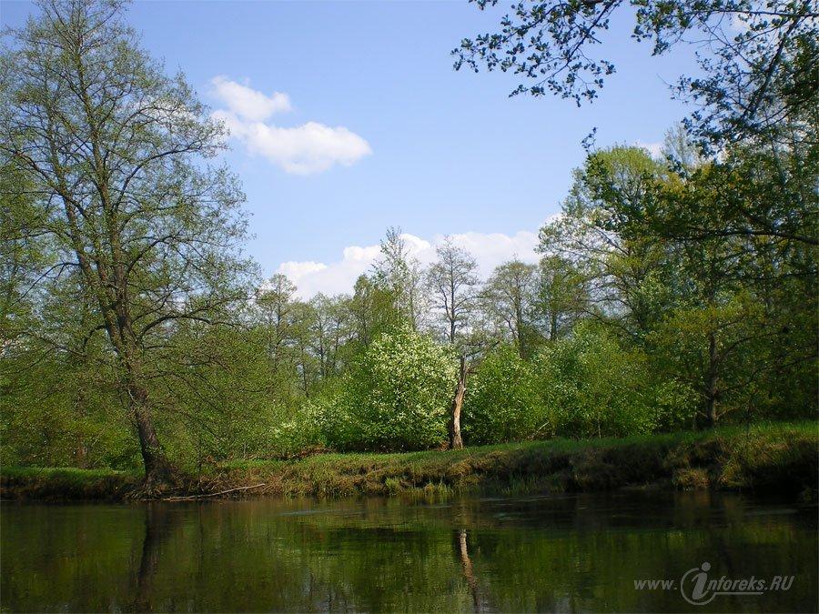 Река Колпь Мещерского края 63