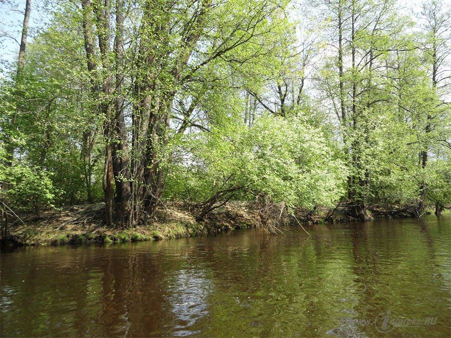 Река Колпь Мещерского края 17