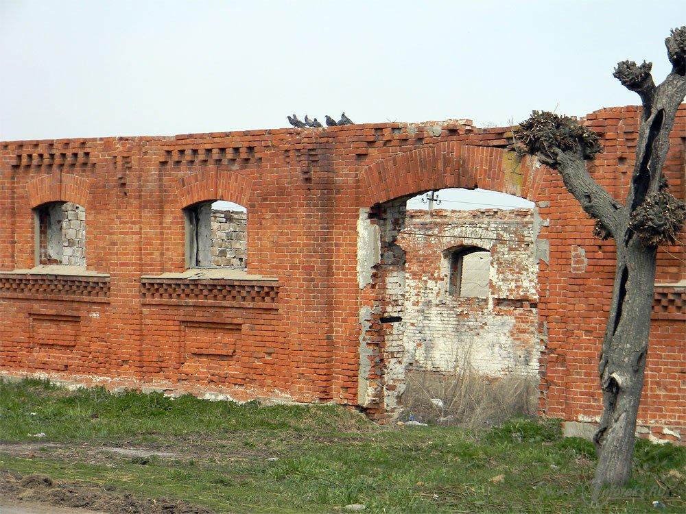 Старожиловский конный завод 17