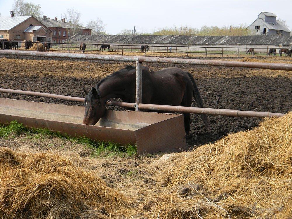 Старожиловский конный завод 19