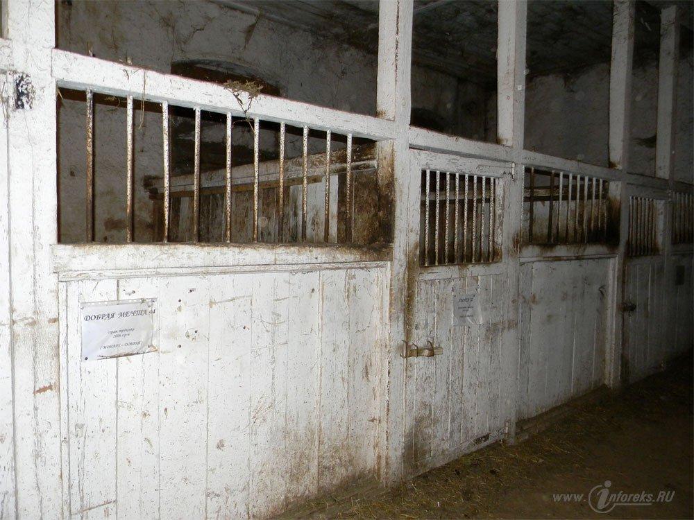 Старожиловский конный завод 21