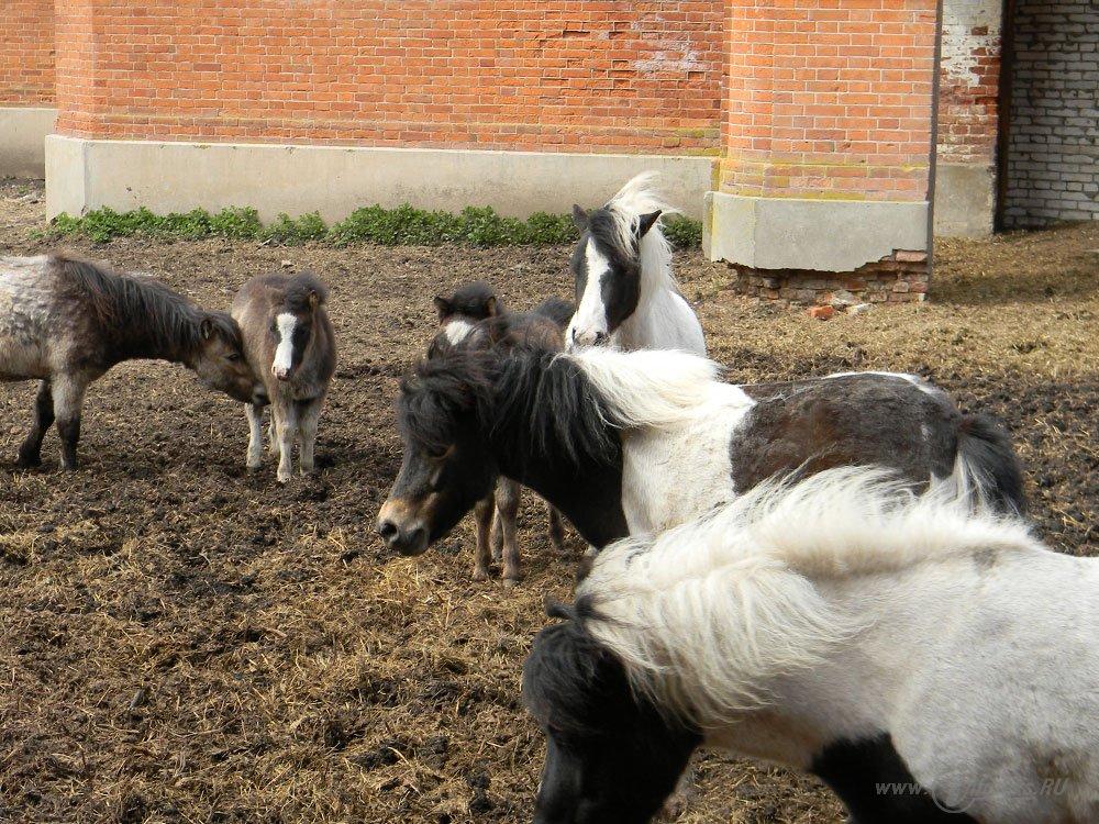 Старожиловский конный завод 27