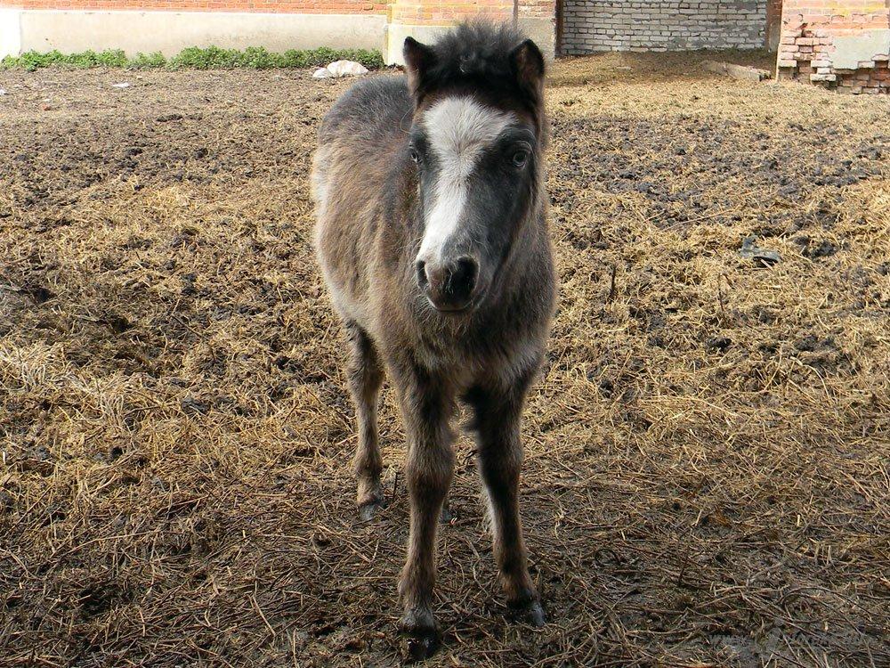 Старожиловский конный завод 33