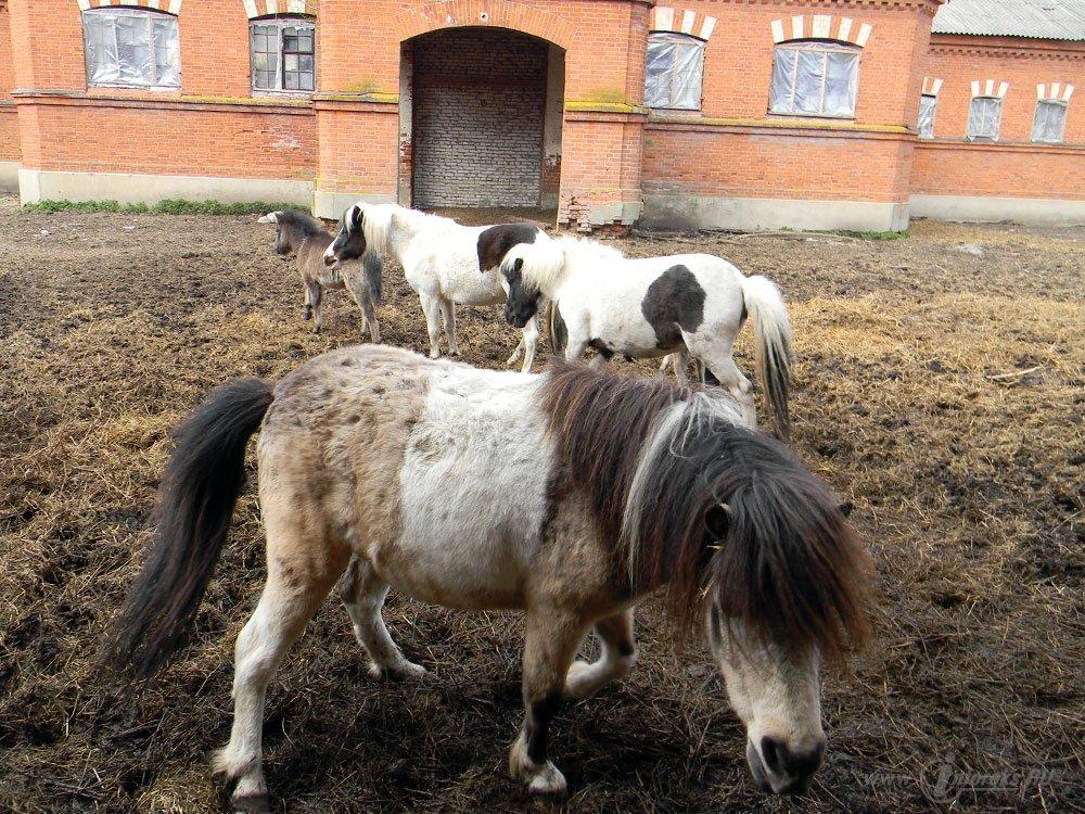 Старожиловский конный завод 37
