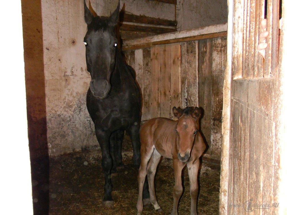 Старожиловский конный завод 39