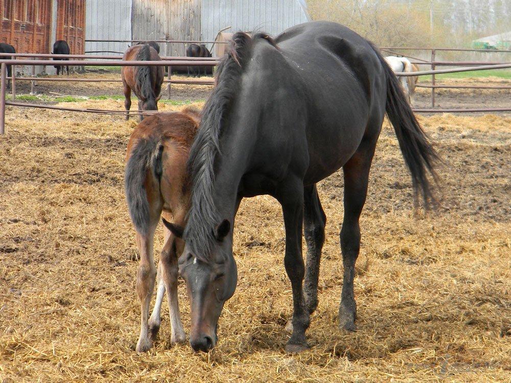 Старожиловский конный завод 47