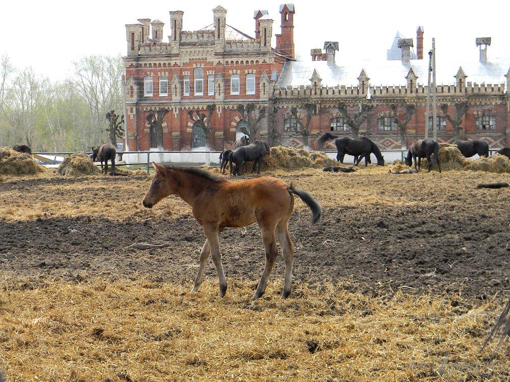 Старожиловский конный завод 57