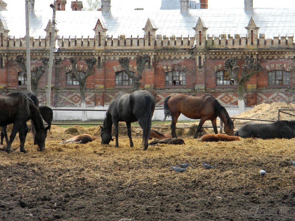 Старожиловский конный завод 59