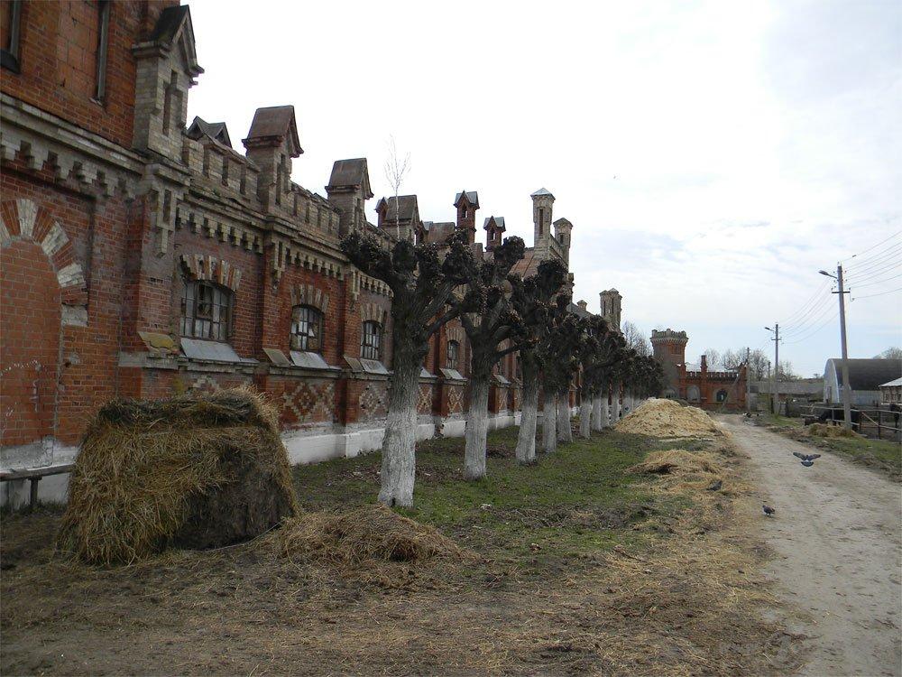 Старожиловский конный завод 81