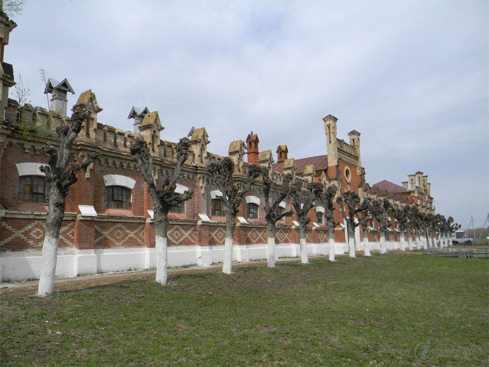 Старожиловский конный завод 95
