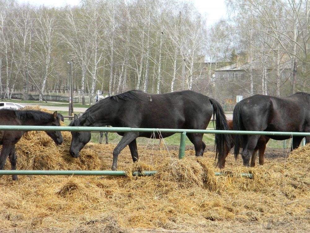 Старожиловский конный завод 7