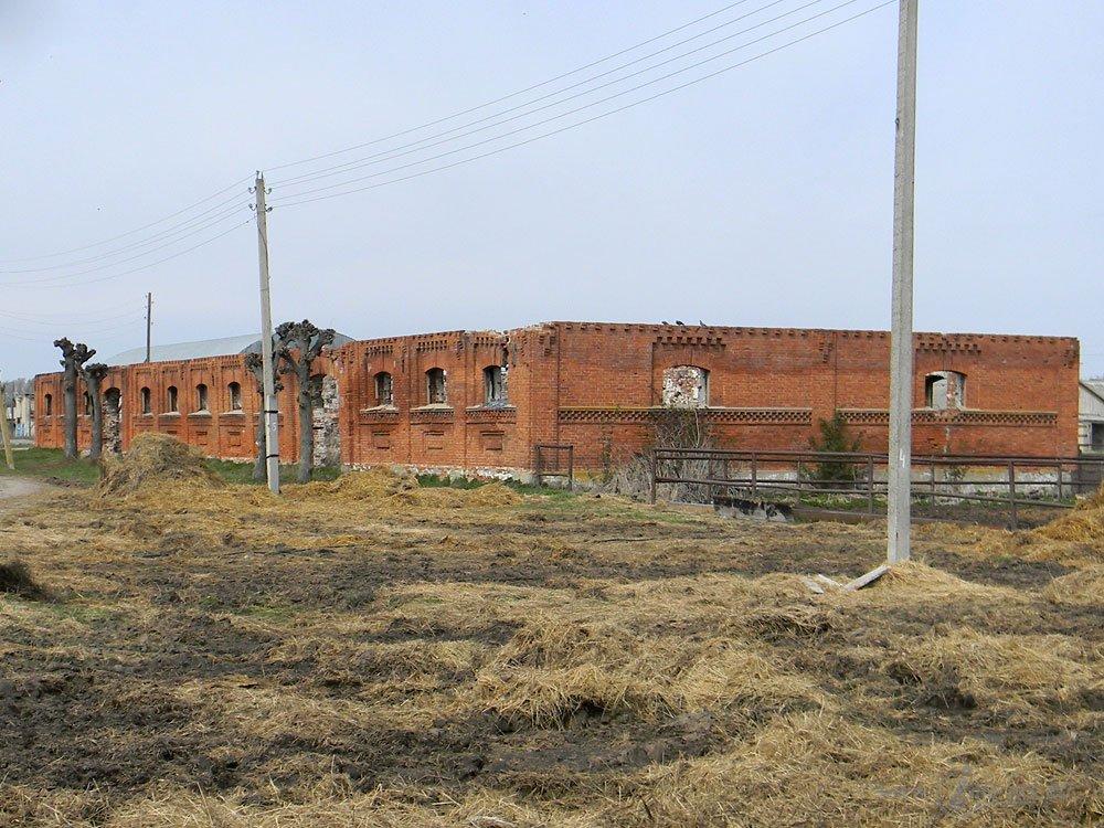 Старожиловский конный завод 13
