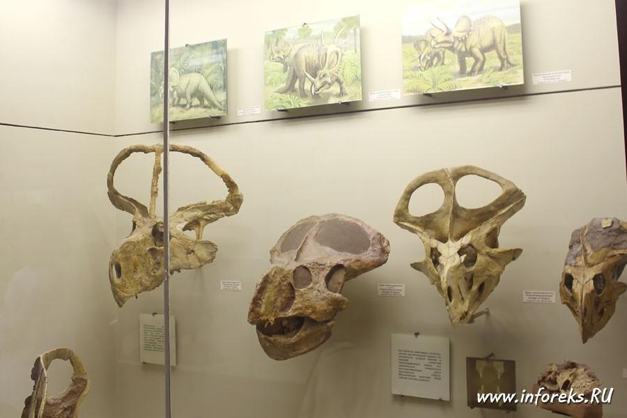 Палеонтологический музей в Москве 67