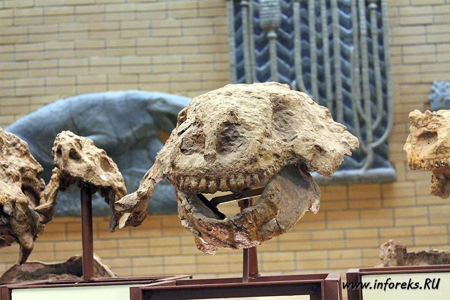 Палеонтологический музей в Москве 35