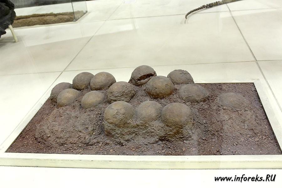 Палеонтологический музей в Москве 37