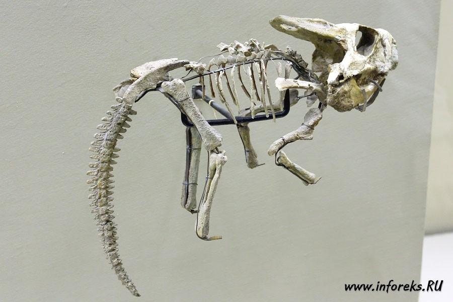 Палеонтологический музей в Москве 41