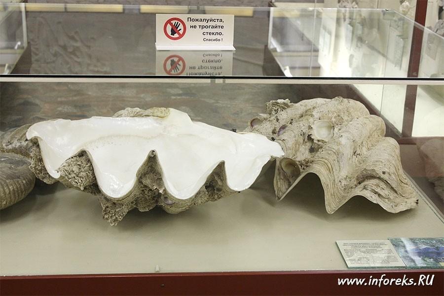 Палеонтологический музей в Москве 65