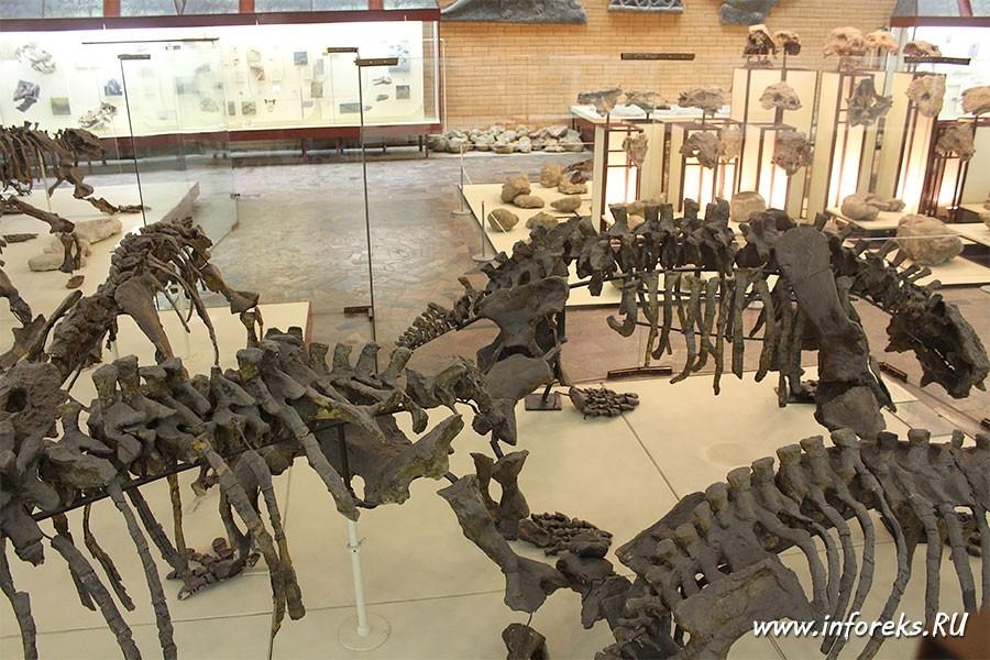 Палеонтологический музей в Москве 19