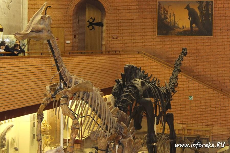 Палеонтологический музей в Москве 21