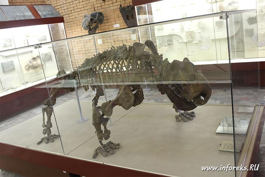 Палеонтологический музей в Москве 3