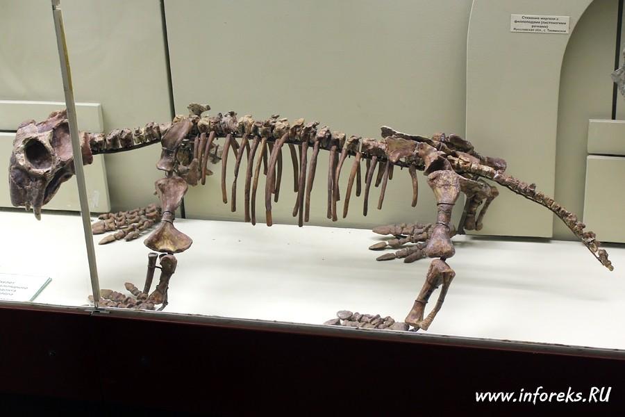 Палеонтологический музей в Москве 53