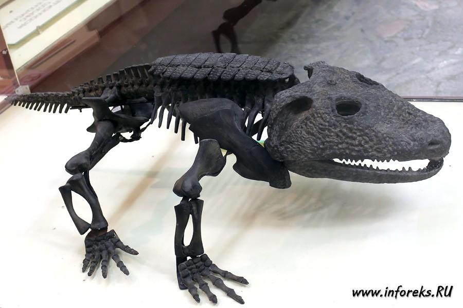 Палеонтологический музей в Москве 61