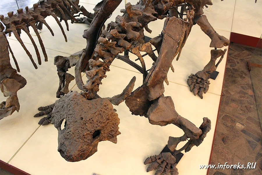 Палеонтологический музей в Москве 49