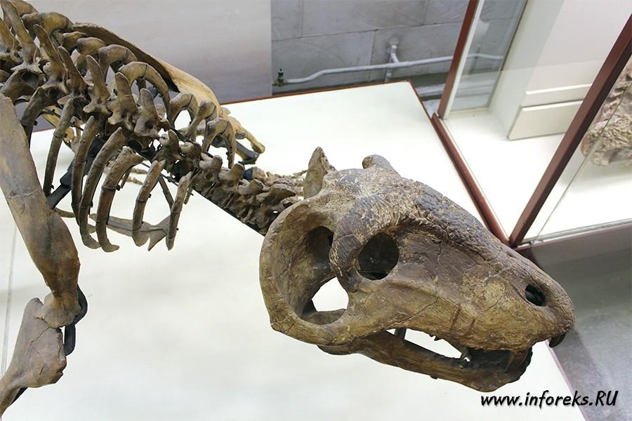 Палеонтологический музей в Москве 47