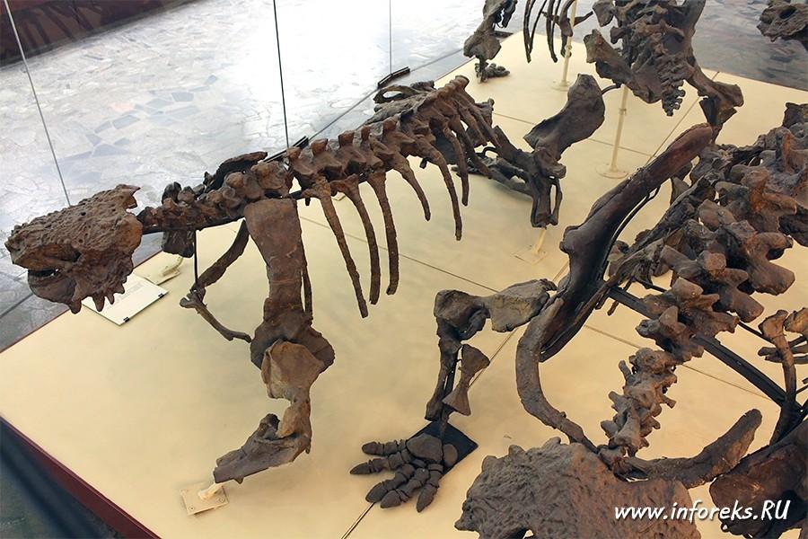 Палеонтологический музей в Москве 45