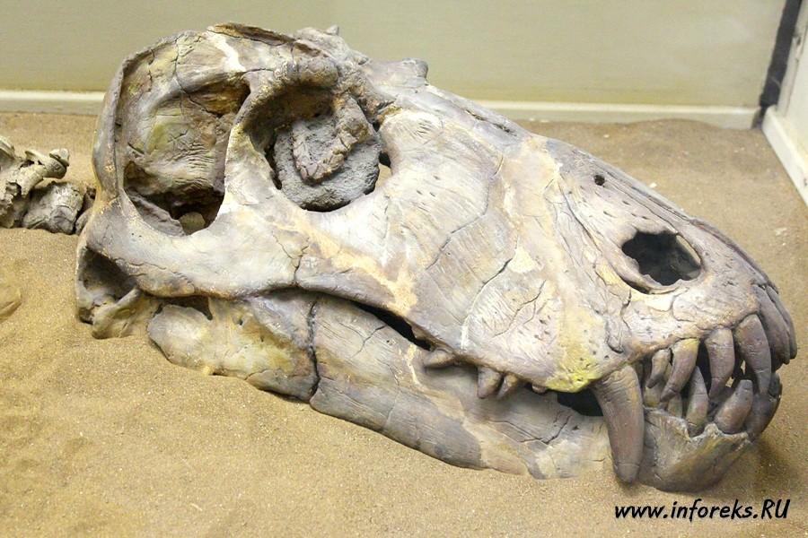 Палеонтологический музей в Москве 43
