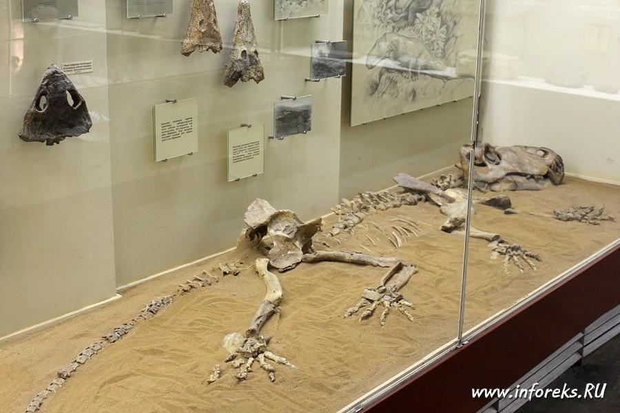 Палеонтологический музей в Москве 33