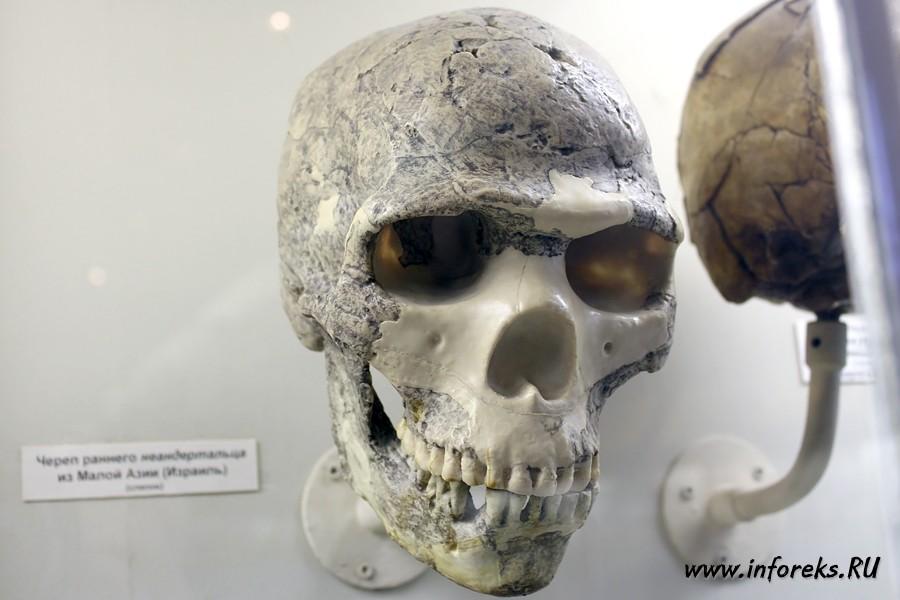 Палеонтологический музей в Москве 39